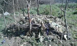 compost3